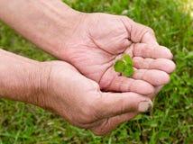 拿着三叶草叶子的老人 免版税库存图片