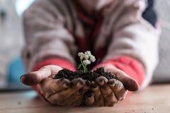 拿着与一朵白色春天花的一个人的正面图土壤 免版税图库摄影