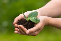 拿着与土壤的手幼木在被弄脏的背景 免版税库存图片