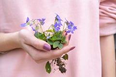 拿着与根的妇女手紫罗兰色花 库存图片