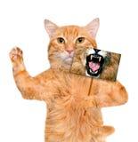 拿着与狮子嘴的猫一张卡片 图库摄影