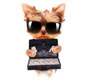 拿着与金钱的小狗案件 免版税库存图片
