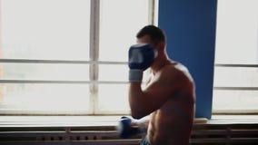 拿着专业与他的衬衣的拳击手阴影拳击佩带的拳击手套 在关闭的垂直的照相机运动 股票视频