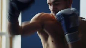 拿着专业与他的衬衣的拳击手阴影拳击佩带的拳击手套 在关闭的垂直的照相机运动 股票录像