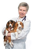 拿着两三只逗人喜爱的小狗的狩医 库存照片
