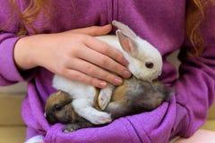 拿着两只宠物兔子的女孩 库存照片