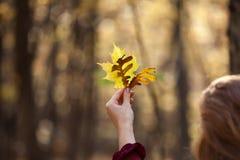 拿着五颜六色的秋叶,加拿大的妇女 库存图片