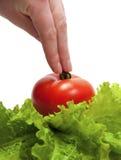 拿着人力蕃茄的现有量 库存照片