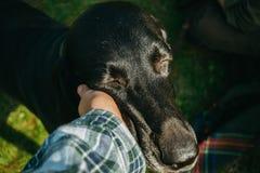 拿着他的狗,棕色狩猎德国短毛指针的所有者, kurzhaar, 免版税图库摄影