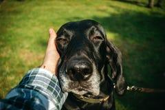 拿着他的狗,棕色狩猎德国短毛指针的所有者, kurzhaar, 免版税库存图片