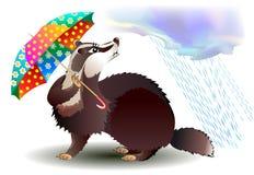 拿着伞的小的獾的例证 库存图片