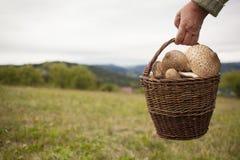 拿着伞菌的篮子老妇人 免版税库存图片