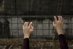拿着充满希望的手篱芭 库存图片