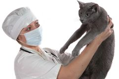 拿着医疗妇女的猫新 免版税库存照片
