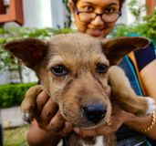 拿着印地安街道小狗的夫人面对显示anim的照相机 免版税库存图片