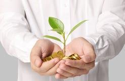 拿着发芽从几枚硬币的植物 免版税图库摄影