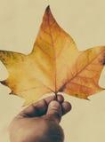 拿着叶子的人手 图库摄影