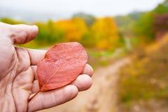拿着叶子的现有量 免版税图库摄影
