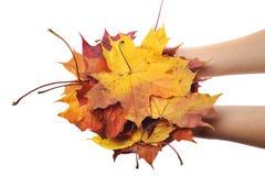 拿着叶子的美好的现有量 免版税图库摄影