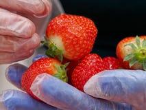 拿着和准备草莓的厨师 免版税库存图片