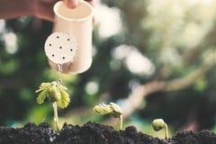 拿着喷壶从事园艺的绿色植物的手 免版税库存图片