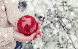 拿着圣诞节红色球的女性手 冷淡的冬日在多雪的森林圣诞快乐和新年快乐里 免版税库存照片