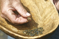拿着在一个木碗的淘金者河矿块 图库摄影