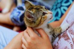 拿着在一只姜手上的一只小猫在白色背景 免版税库存图片