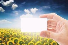 拿着在向日葵Fie的农业农夫空白的名片 免版税库存图片