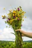 拿着在她的手上与多彩多姿的野花的女孩美丽的花束 令人惊讶的束在自然的wilf花 免版税库存图片