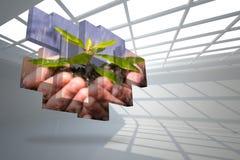 拿着在抽象屏幕上的手的综合图象灌木 免版税库存图片