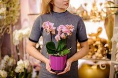 拿着在桃红色罐的女孩一朵美丽的玫瑰色颜色兰花 免版税库存图片