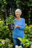 拿着在植物中的微笑的资深妇女画象紫色花盆 图库摄影