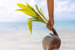 拿着在海滩的妇女手年轻椰子 免版税库存照片