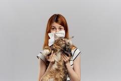 拿着在灰色背景的年轻美丽的妇女一只猫,过敏对宠物,流鼻水 库存图片
