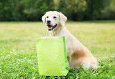 拿着在牙的美丽的金毛猎犬狗绿色购物袋在草在夏天 库存照片