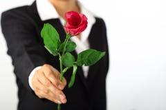 拿着在白色的手一朵玫瑰花 库存图片