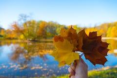 拿着在秋天背景的手枫叶 免版税库存照片