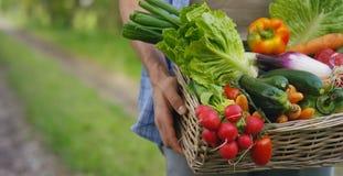 拿着在篮子的一位愉快的年轻农夫的画象新鲜蔬菜 在自然背景生物,生物PR的概念 免版税图库摄影