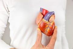 拿着在胸口前面的女性手心脏模型 库存图片