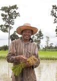 拿着在稻田的农夫米。 图库摄影