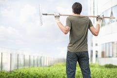 拿着在他的肩膀的一把犁耙和看绿色植物的年轻人在一个屋顶上面庭院里在城市 库存图片