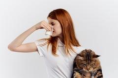 拿着在轻的背景的年轻美丽的妇女一只猫,过敏对宠物,缅因浣熊 免版税库存照片