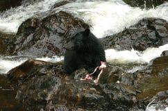 拿着在Of Whales王子的黑熊一条三文鱼在阿拉斯加 库存图片