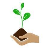 拿着堆土和生长植物的风格化手 库存例证