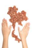 拿着堆棕色有机米和茉莉花的妇女的手 免版税图库摄影