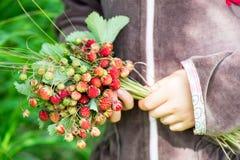 拿着夏天束成熟野草莓的小女孩与 免版税库存照片