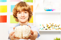 拿着大脑模型的年轻男孩在教室 免版税库存图片