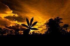 拿着大麻标志纸的手的剪影 库存照片