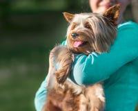 拿着她的在她的手上的一个十几岁的女孩宠物约克夏狗 与停留的舌头的一条愉快的狗 狗和人 免版税库存图片